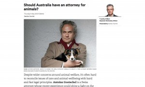 Should Australia have an attorney for animals?
